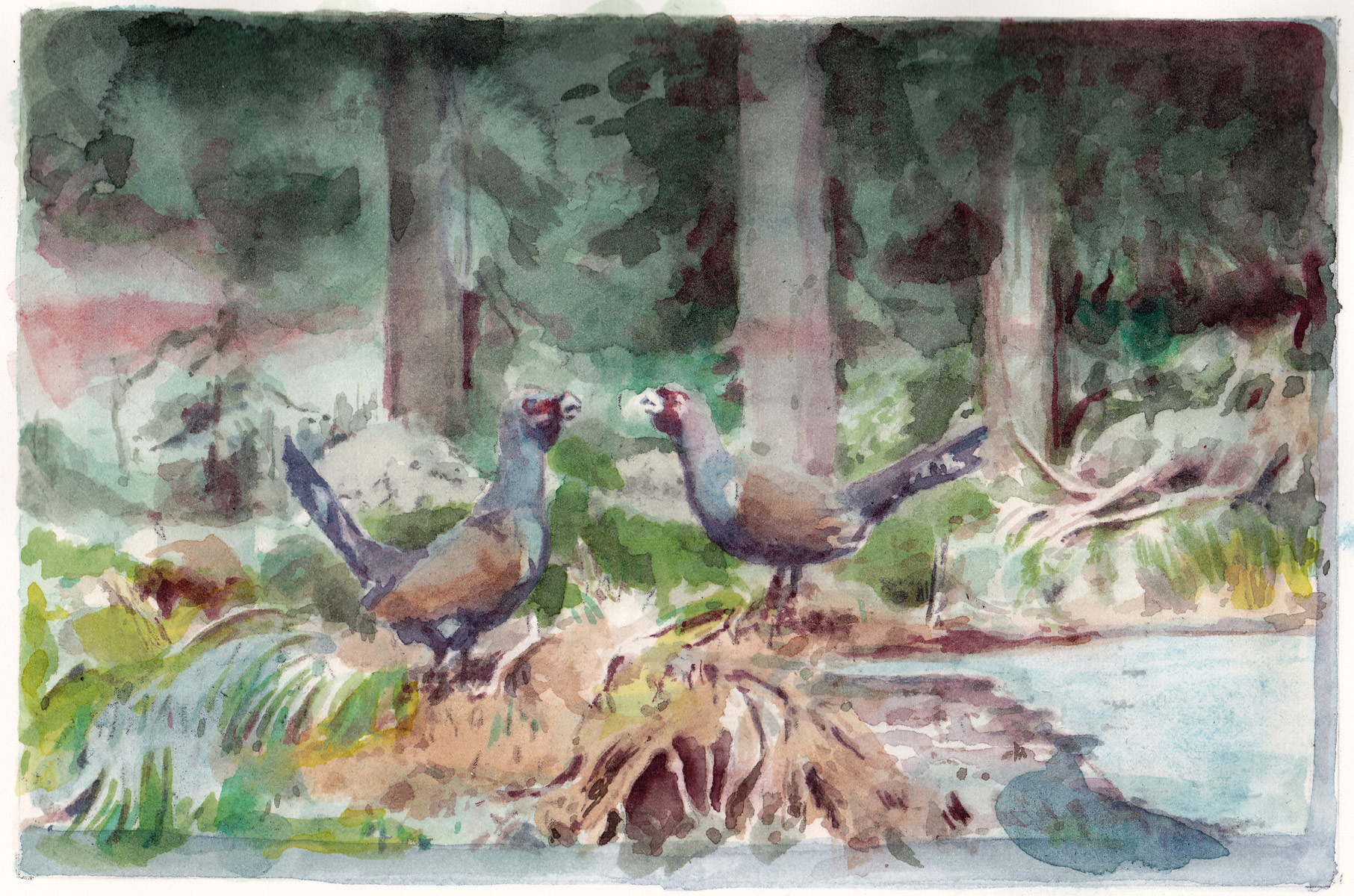Pheasants, 2014<br>12x18cm<br>Water color on paper