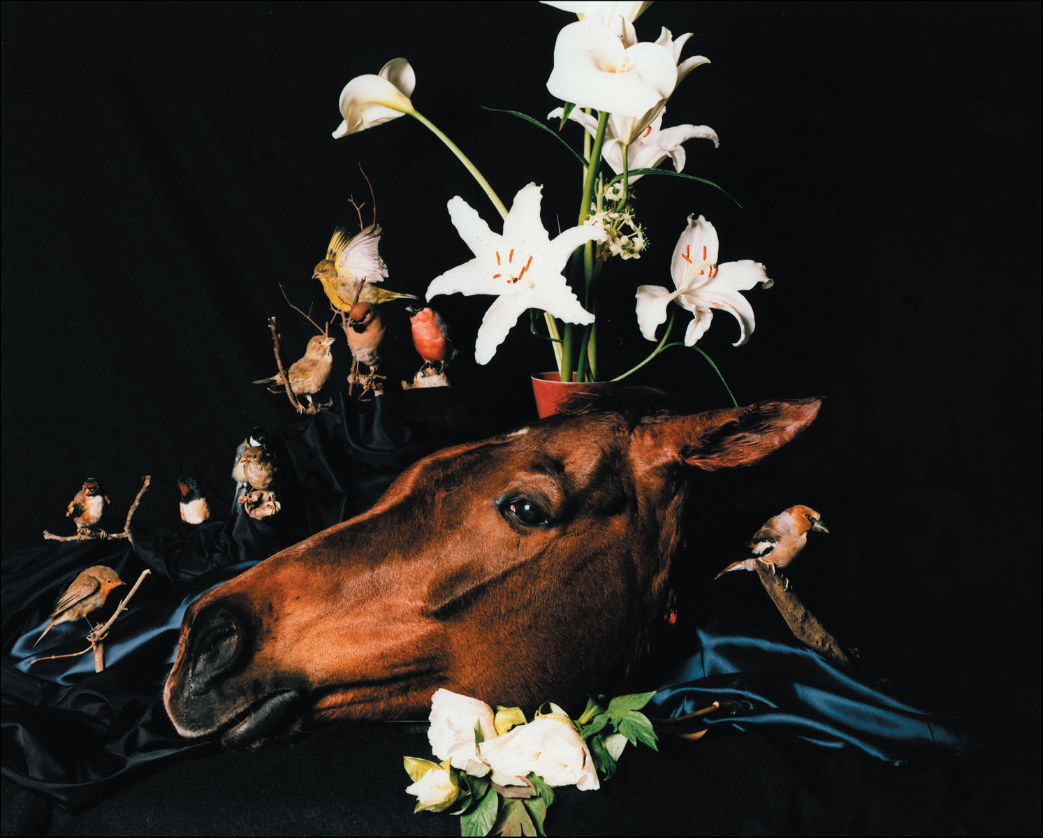 Horse's Head with Flowers, 2005<br>Lambda Print<br>125x156cm