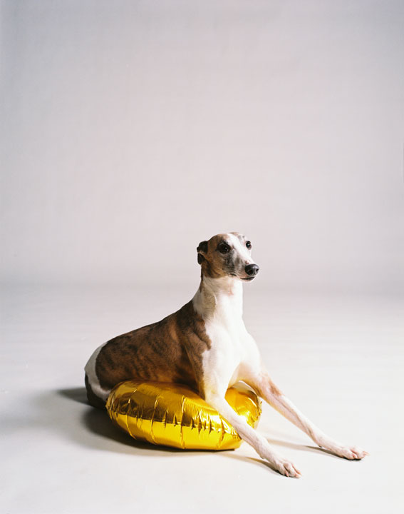 Dog with golden balloon (part I), 2009<br>Lambda Print<br>125x100cm