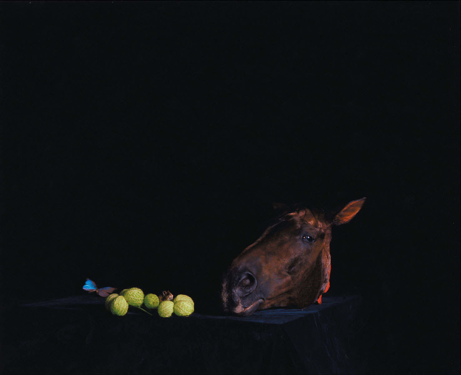 Horse's Head with Mouse and Butterfly, 2005<br>Lambda Print<br>154x125cm