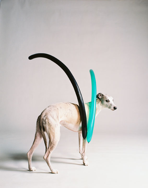 Dog with two narrow balloons (part 2), 2009<br>Lambda Print<br>125x100cm