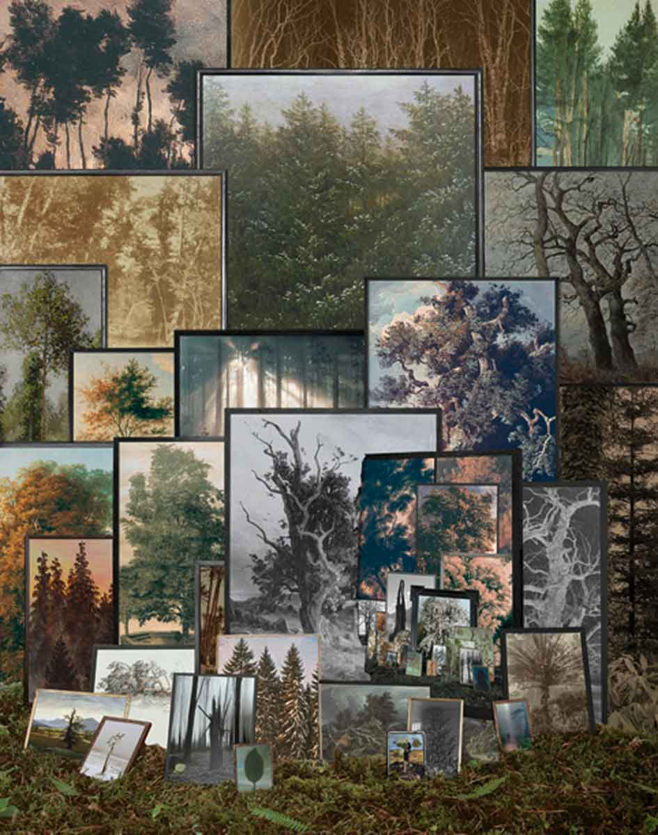 Forest of Pictures, 2011<br>80x60cm<br>c-print/diasec